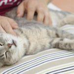Maženje-mačke
