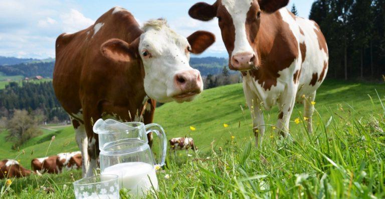 kravlje-mleko