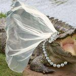 krokodil-mlada-ilustracija