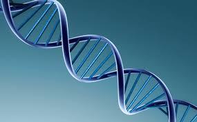 DNK ODREĐUJE DA LIS TE JUTARNJI I NOĆNI TIP