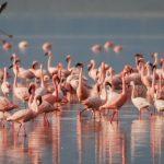 flamingosi-jato-890x395