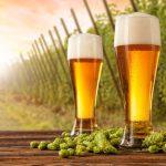 pivo i hmelj