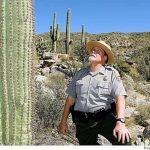 saguaro kaktusi